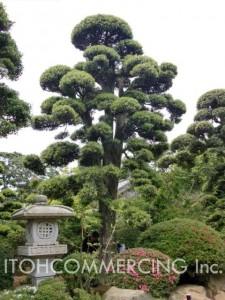 植木の輸出